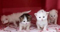 Kediler otizmli çocuklar üzerinde olumlu etki yapıyor
